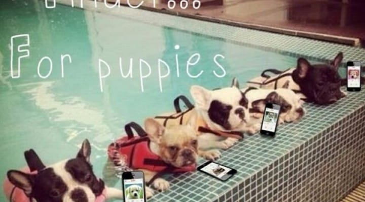 Dog reveals how to Tinder with app matches
