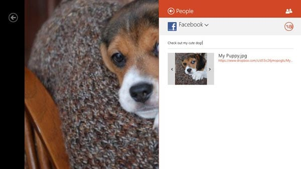 Dropbox_for_Windows_8_dogs