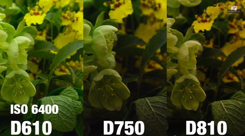 Nikon D750 vs. D610, D810