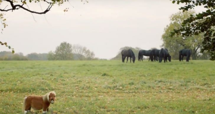 Amazon Prime UK Horse Advert Goes Viral