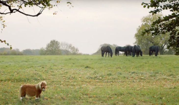 amazon-prime-advert-horse-video