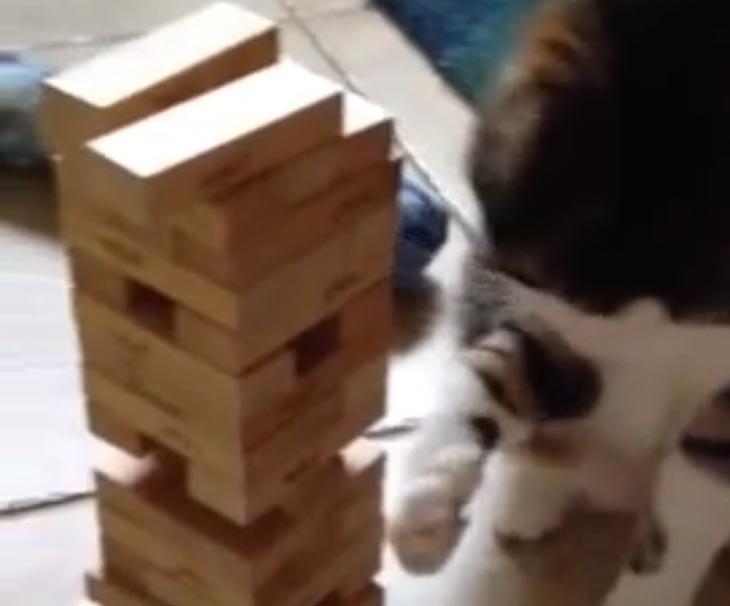 cat-plays-jenga