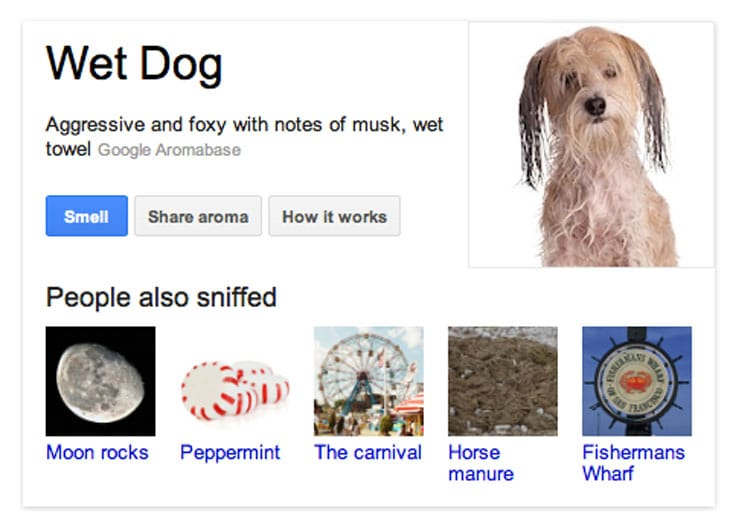 google-nose-wet-dog