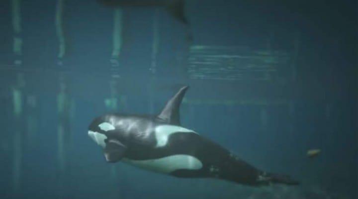 GTA V Orca whale, Shark, Dolphin peyote location