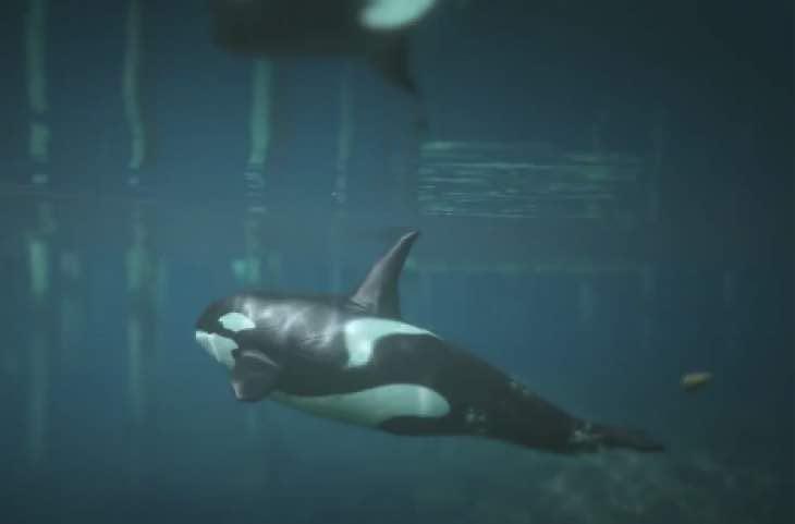 gta-v-orca-shark-peyote-location