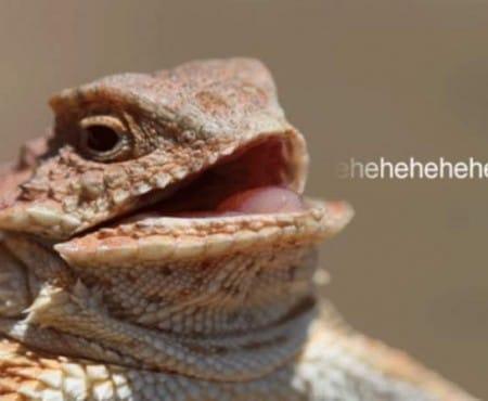 New Lizard Squad Twitter dictates Xbox, PSN status