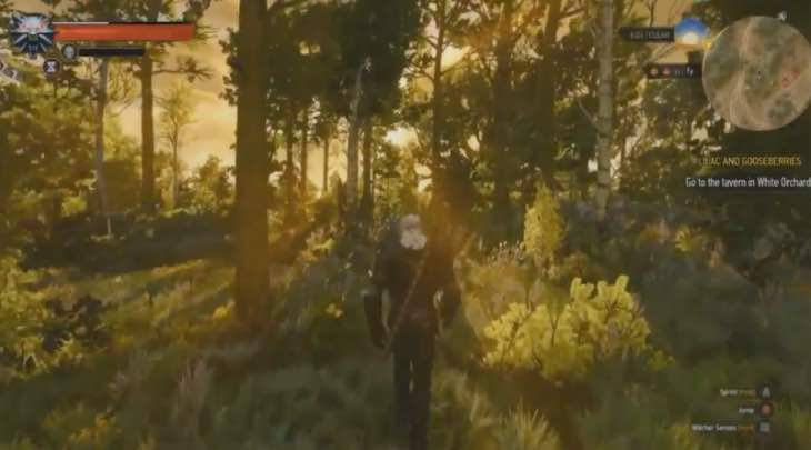 the-witcher-3-woods